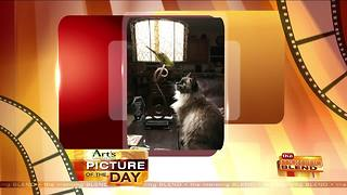 Art's Cameras Plus Picture of the Day for 12/1! - Video
