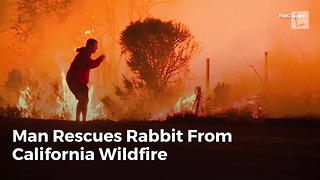 Man Rescues Rabbit From California Wildfire - Video