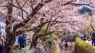 Stunning Timelapse Footage Captures Beauty Of Japan From Cherry Blossoms To Bustling Supercities
