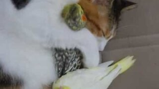 Cat snuggles up with birds