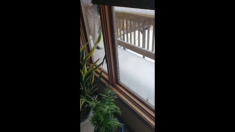 Cat Has Adorable Reaction To Seeing Snow For The First Time!