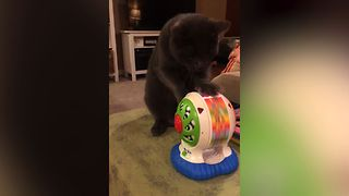 These Witty Pets Will Do Anything For A Treat - Video