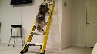 Clever Pooch Shows Just How Dexterous And Disciplined He Can Be  - Video