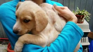 Abandoned puppies get second chance at life - Video