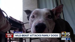 Dog owner warning others after dogs attacked by wild animal in Anthem - Video