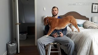 Dog tries everything to get attention from her gamer owner