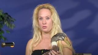 Check Out This Adorable Therapy Duck - Video