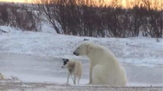 The unlikely friendship between a dog and a polar bear