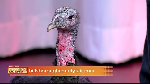 Hillsborough County Fair | Morning Blend