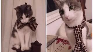 Fashionable kitten can't decide between tie or bow tie - Video