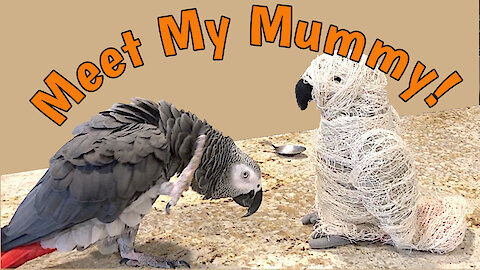 Parrot encounters scary mummy, hilarity ensues