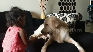Dog and toddler have tug-of-war