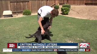 Critters Without Litters celebrates their five year anniversary - Video