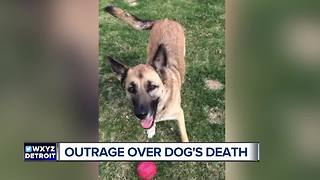 Outrage over dog's death - Video