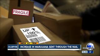 Number of packages mailed in Colorado with marijuana inside spikes - Video