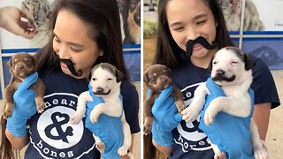 Handle-Bark Moustache! Adorable Puppy With Hilarious Moustache Marking Up For Adoption