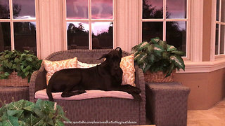 Great Dane enjoys stunning stormy Florida sunset