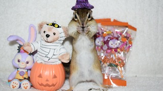 Happy Halloween Chipmunk - Video