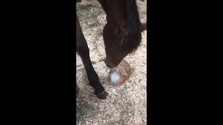 Tiny kitten and horse share a sweet bonding moment