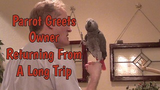 Parrot welcomes owner home after long trip away