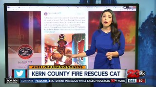 Hello humankindness: KCFD rescues kitty