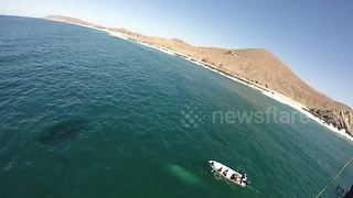 Paraglider films whale rescue off Mexico - Video