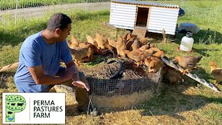 Mistakes Made With The Chicken Tractor On Steroids
