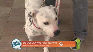 Nashville Humane Association Pet of the Week 7-28-17 - Video