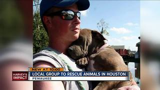 Local animal rescue group heads to Houston - Video