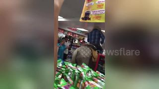 Cowboy rides into supermarket on his horse to buy beers - Video