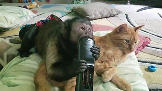 Cat and Capuchin monkey watch TV together - Video