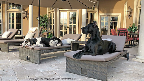 Laid back doggies chill out on patio furniture