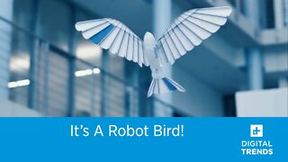 It's a Robot Bird!