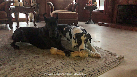 Great Dane Steals Huge Dog Bone With An Epic Swipe