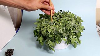 Plant ressurection: House plant bought back to life - Video
