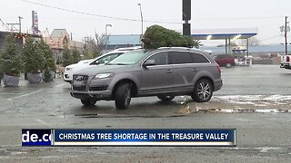 Christmas tree shortage in the Treasure Valley