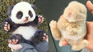 Cute baby animals Videos Compilation cute moment of the animals - Cutest Animals On Earth #2
