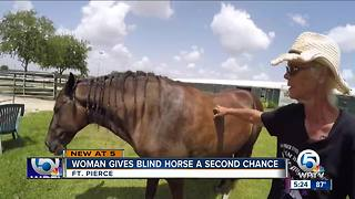 Woman gives blind horse a second chance in Fort Pierce, Florida
