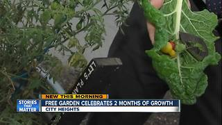 Free garden celebrates 2 months of growth - Video