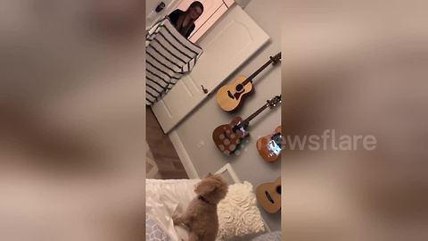 Adorable dog duped by the viral #WhatTheFluffChallenge