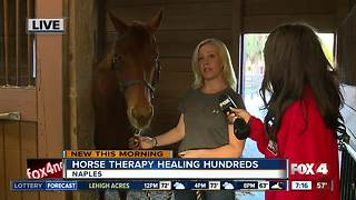 Horse therapy healing hundreds in Naples - 7am live report