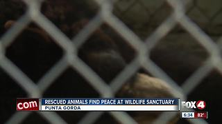 Rescued animals find peace at wildlife sanctuary