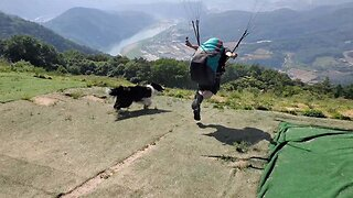 Ruff Ride! Confused Pooch Chases Paragliders As They Take Off From Massive Hill