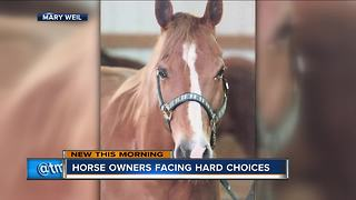 Wisconsin horse owners face tough choices when putting down animal - Video