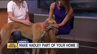 Rescues in Action April 14: Help find Hadley a forever home - Video