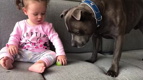 Dog And A Baby Have Similar Reaction To Tasting A Lime
