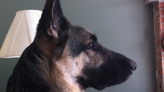 Is this dog guilty of eating the cat's food? - Video