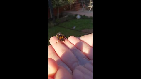 Woman nurses injured bee back to health