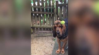 Funny Dog Doesn't Like Playing Fetch