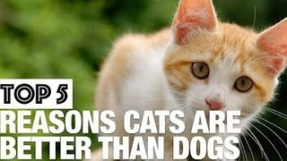 Why Cats Are Better Than Dogs - Video